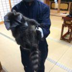 奈良県生駒市 某 お寺さん。害獣駆除工事!