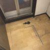 大東市で脱衣室の床の張り替え